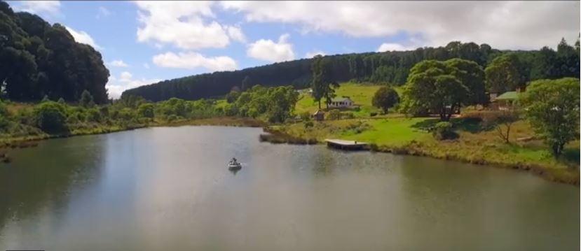 River at Tea Estate in Mulanje