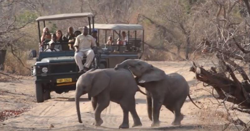 Tourists at Vwaza Marsh Game Reserve